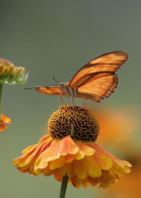 Butterfly - Julia H Photo Print