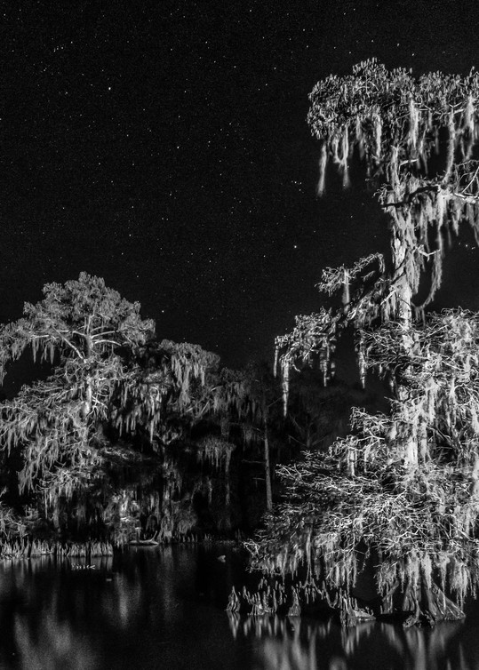 Night Swamp in contrast photography print