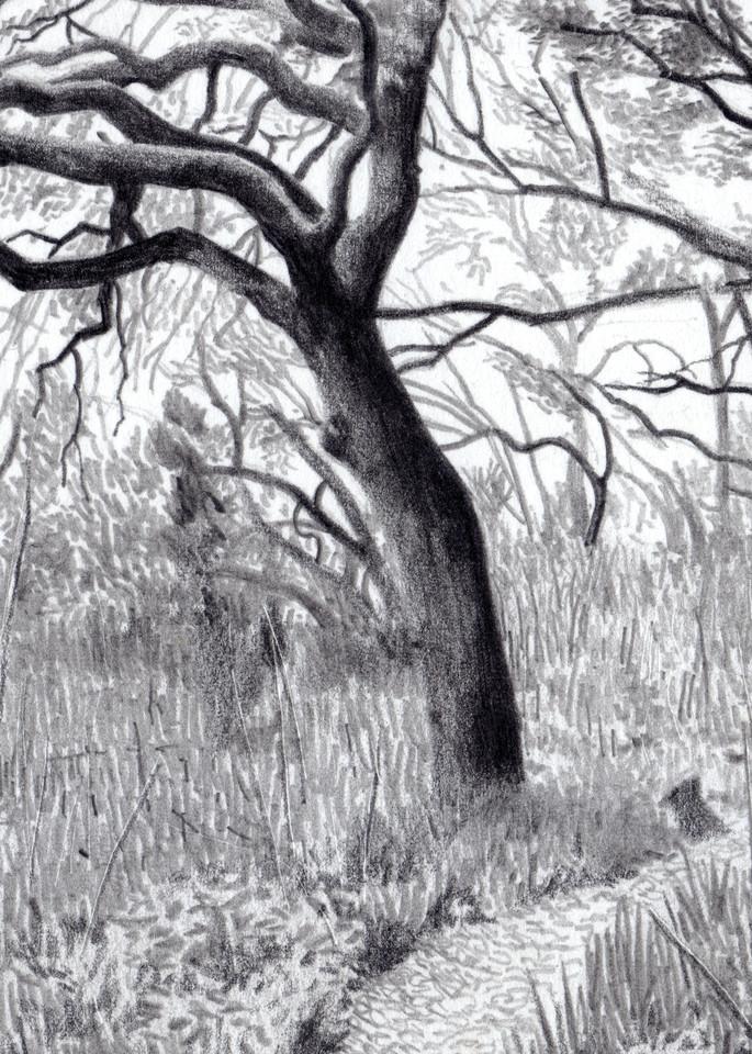 Less Taken, Drawings, The Art of Max Voss-Nester
