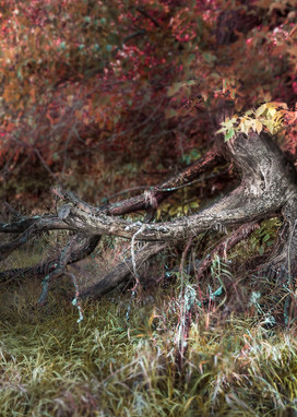 Americana-color: Hay bale and fence post, a color fine art photograph by artist, David Zlotky