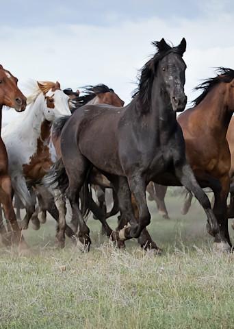 Colorado Herd Art | Sierra Luna Photography