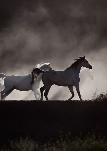 Into The Mist Art   Sierra Luna Photography
