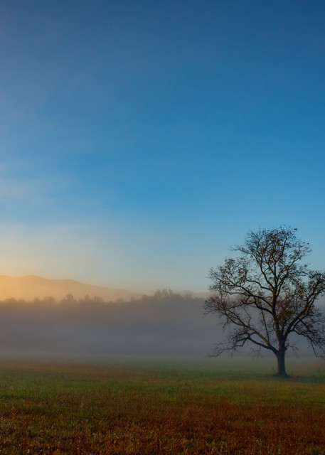 Walnut Tree In The Mist in Cades Cove by Rick Berk