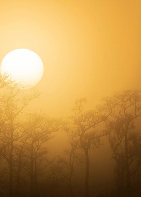 Constance Mier Photography - Florida landscape photography