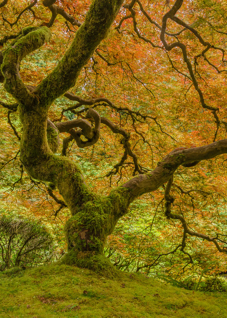 Mossy Maple Art | Jesse McLaughlin Photography