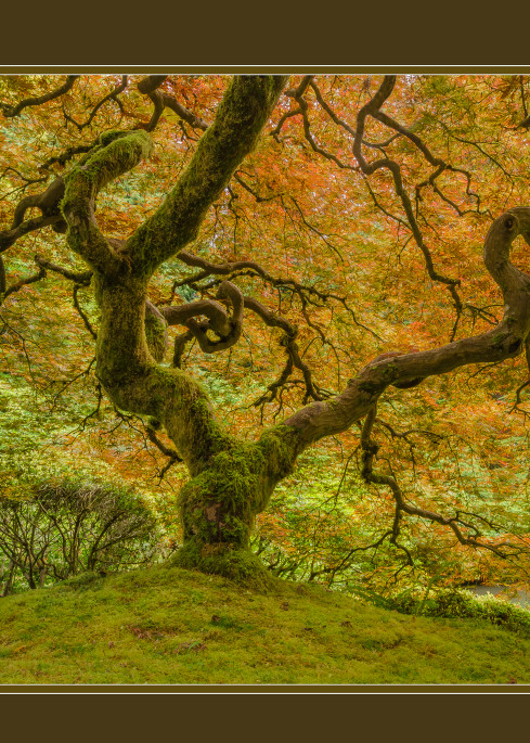 Mossy Maple With Border Art   Jesse McLaughlin Photography