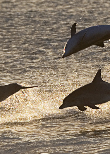 The Leaping Trio by Josh Kimball Photography