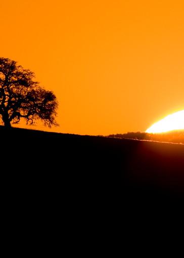 Sunset Oak by Josh Kimball Photography