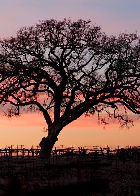 Winter Oak by Josh Kimball Photography