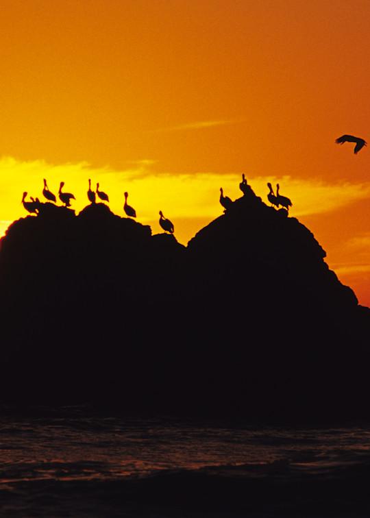 Pelican Perch Photography Art | Josh Kimball Photography