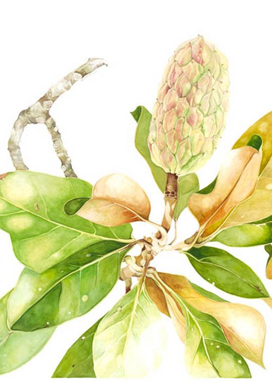Magnolia Art | Digital Arts Studio / Fine Art Marketplace