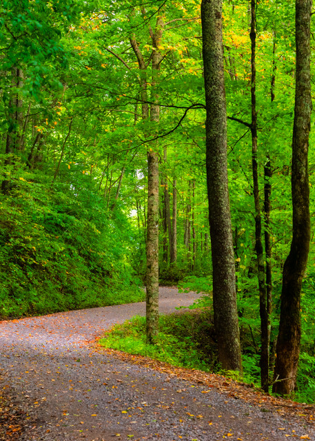 Cherokee National Forest photography