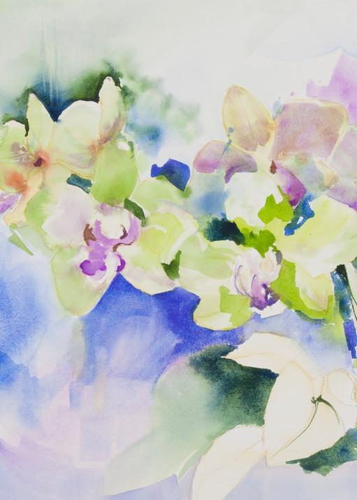 Orchid Paradise - Prints