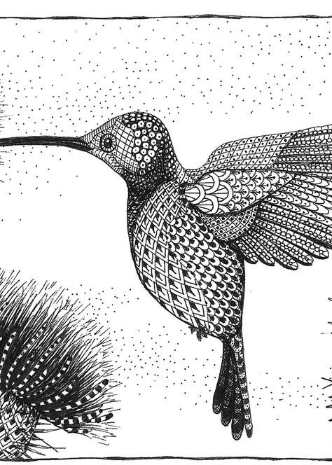 Hummingbird and Thistle