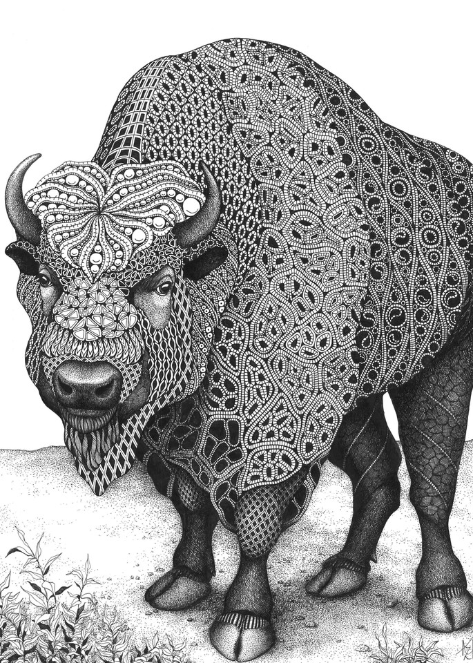 Home on the Range (bison)
