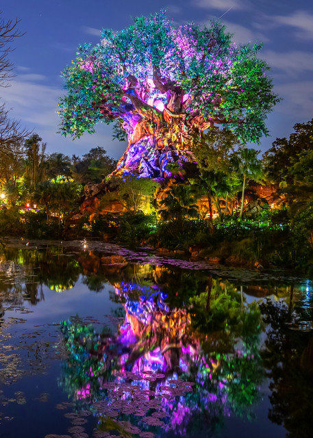 Tree of Life Reflections - Disney Wall Prints | William Drew Photography