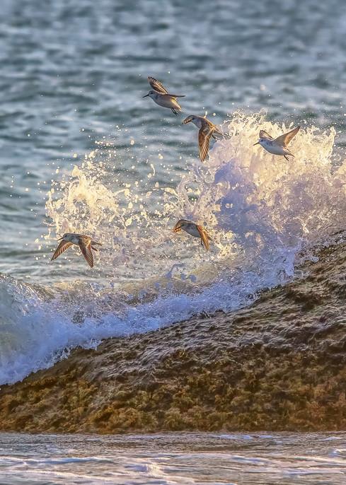 Sanderling Rock And Waves Art | Michael Blanchard Inspirational Photography - Crossroads Gallery