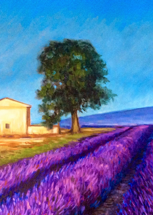 Lavender fields in France Fine Art Print by Hilary J. England
