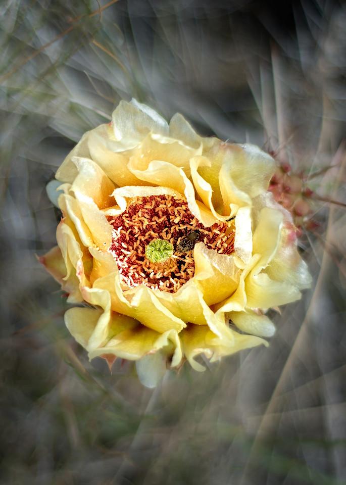 Cactus Flower Photography Art | Craig Edwards Fine Art Images