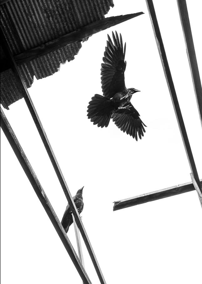 Guardians Photography Art | Craig Edwards Fine Art Images