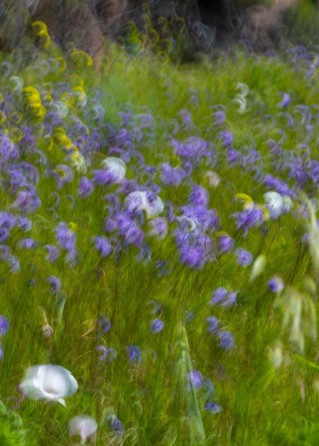 Superbloom Impression 1 Photography Art   Leiken Photography