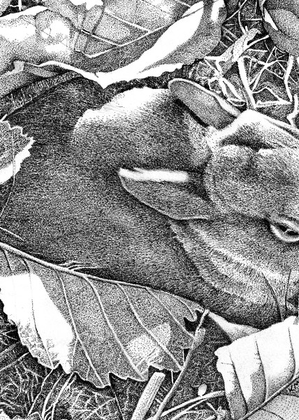 Hazel (Carol's Bunny) Art   Pendragon Art Studios