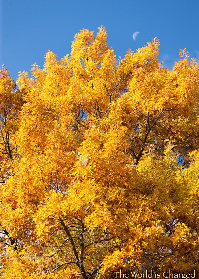 Autumn Oak, Moon and quote - shop prints   Closer Views