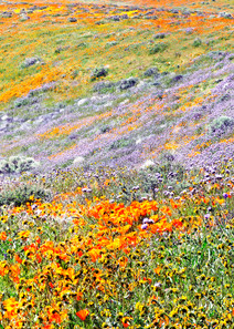 Nature's Palette Photography Art | Josh Kimball Photography