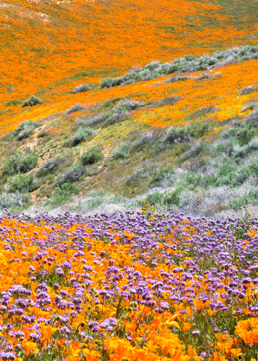Super Bloom Canyon Photography Art | Josh Kimball Photography