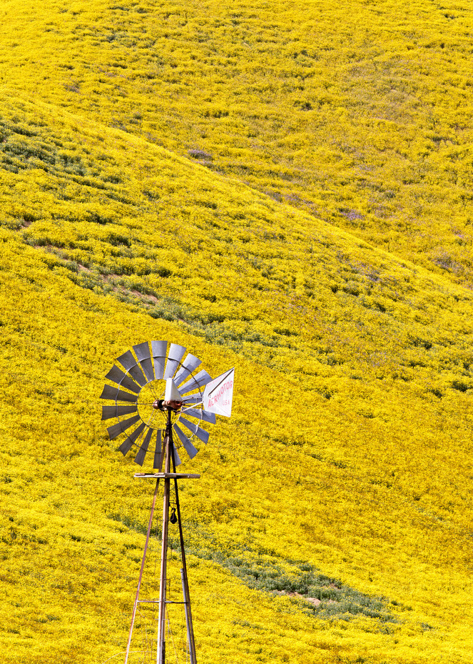 Windy Mustard Hills Photography Art | Josh Kimball Photography