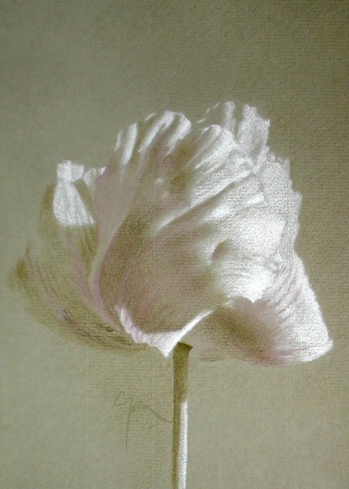 Poppy, Mauve Art | Cristina Goia