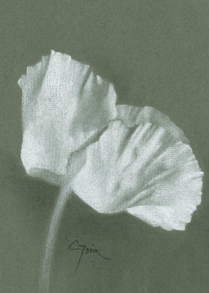 Poppy, White Fan Art | Cristina Goia