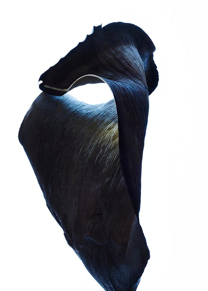 phantom - William Couture