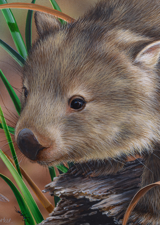 Afternoon Stroll - common wombat with a blue dragonfly Natalie | Jane Parker | Australian Native Wildlife