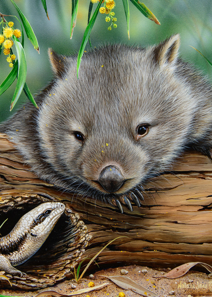 G Day - Common Wombat With Eastern Blue-tongue Lizard Natalie Jane Parker Australian Native Wildlife