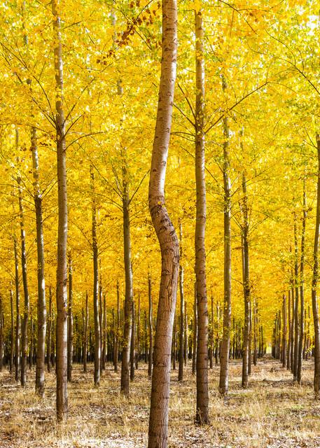 Bordman Trees Photography Art | Vldn Taylor Photography