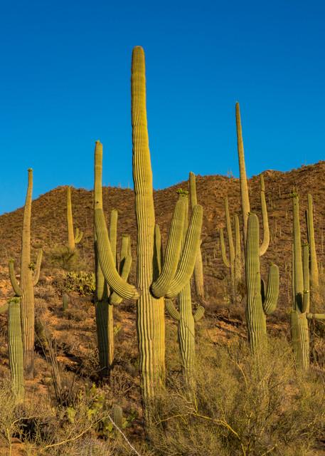 DP508 Saguaro West