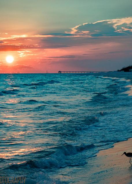 Sunset Bird on Beach Photograph 1006 FL  | Florida Photography | Koral Martin Fine Art Photography