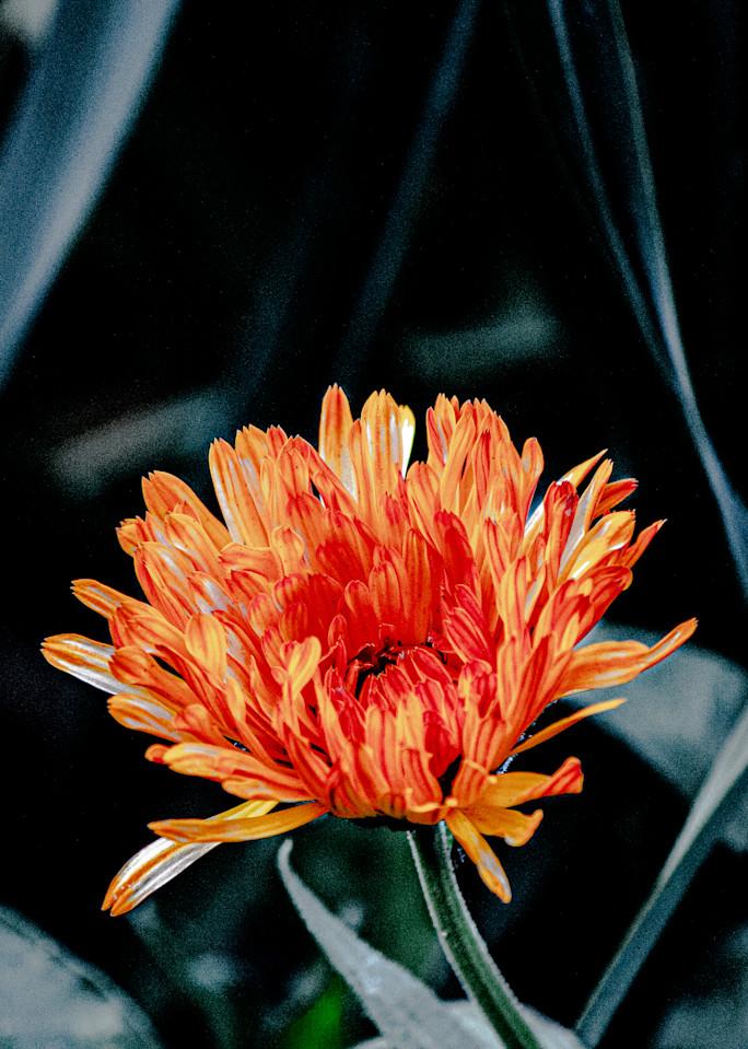 Jasa Fine Art Gallery   5917 FLOWER By Jasa
