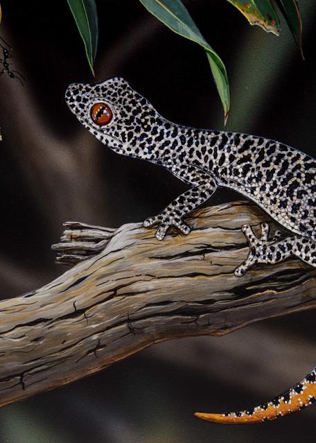 Hello Gecko - Golden Tailed Gecko (Strophurus taenicauda) | Australian Native Wildlife