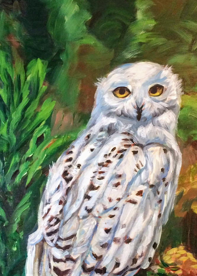 Snowy White Owl Alaska art print by Amanda Faith Thompson