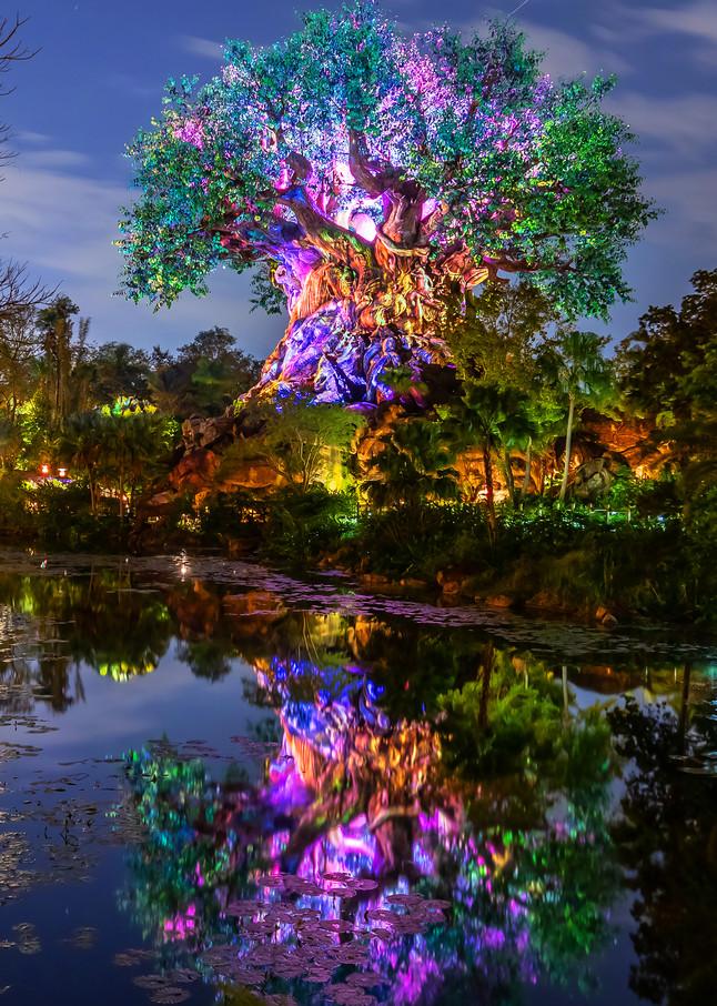 Tree of Life Reflections 2 - Disney World Images | William Drew Photography