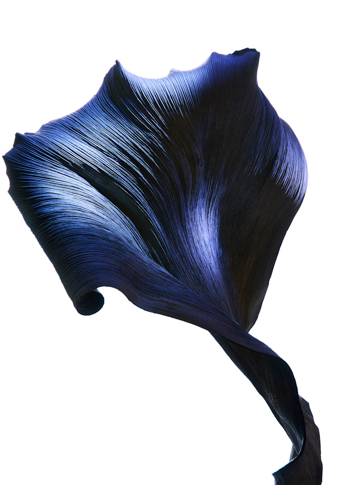 Flower #7 Photography Art | William Couture
