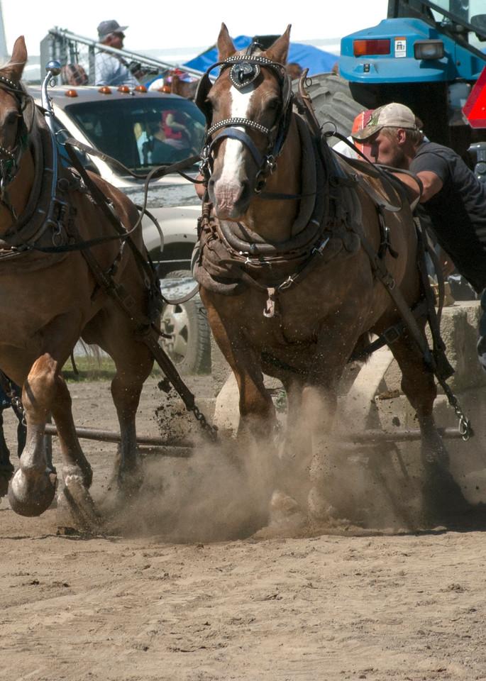 Draft Horse Pull | Tom Nolan | Roost Artist