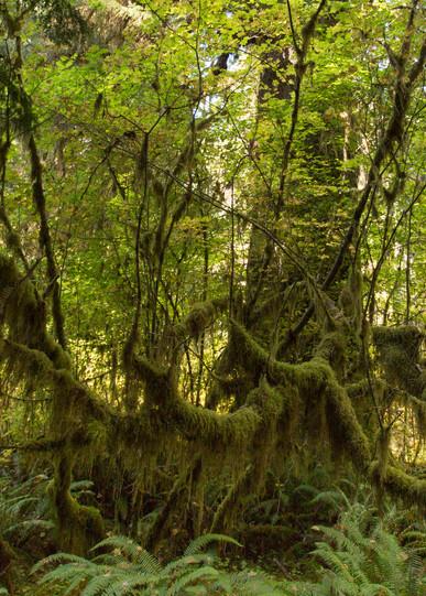 Rainforest Growth Photography Art | Leiken Photography