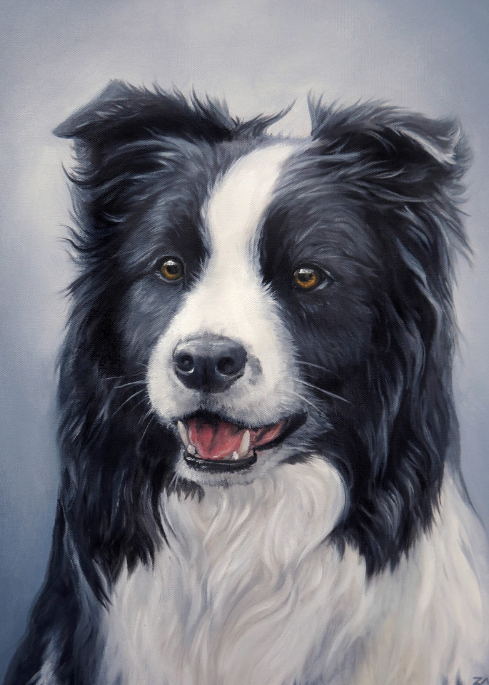 Prints Of Border Collie Painted Portrait In Oil
