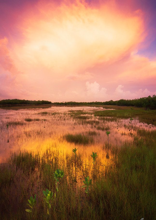 Constance Mier Nature Photography in the Everglades