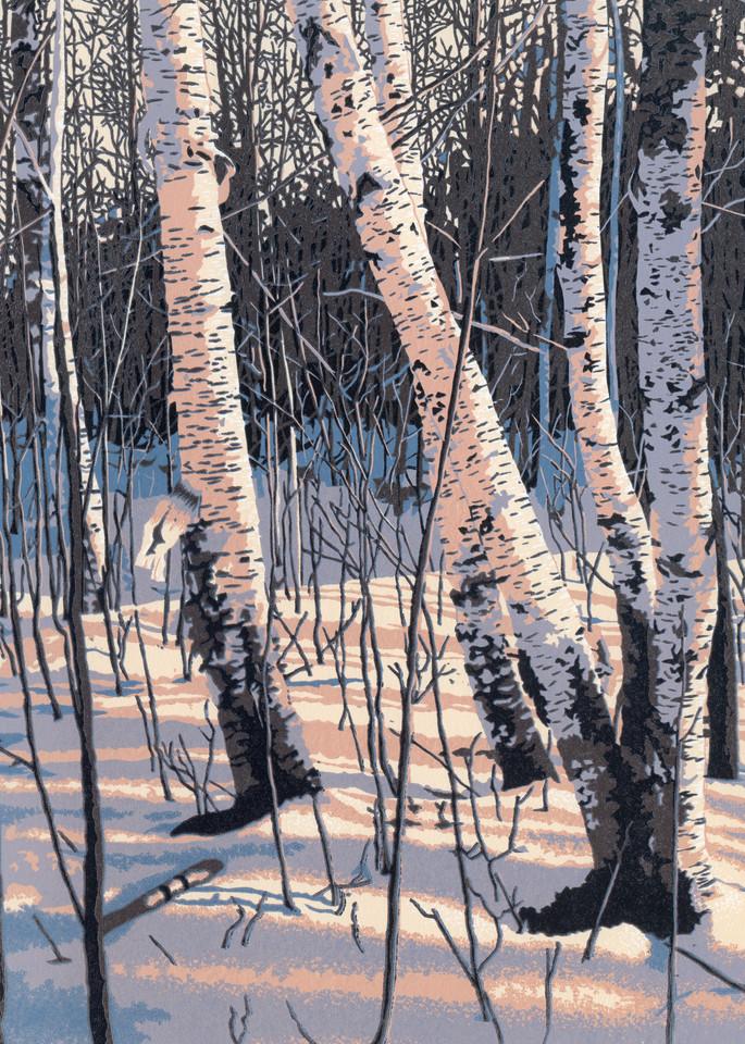 Winter birches reflect afternoon sun