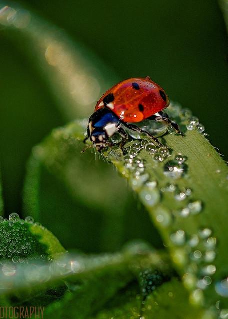 macro shot of Water Drops Photograph 9104 | Waterdrop Photography | Macro Photograph | Koral Martin Fine Art Photography