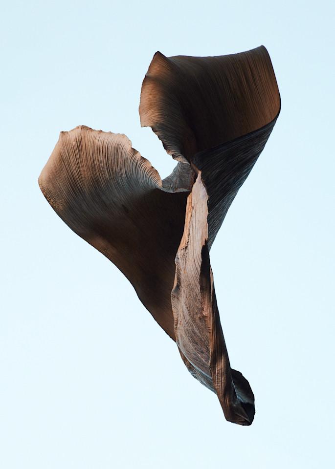 dusk flight, American west - William Couture